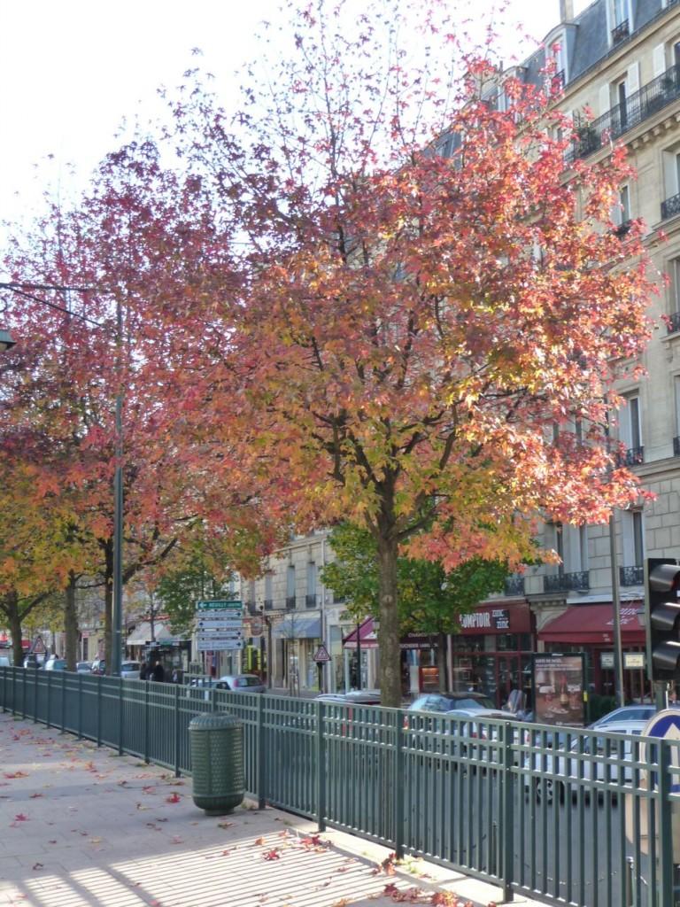 Couleurs et feuillages d'automne dans Neuilly-sur-Seine (92)
