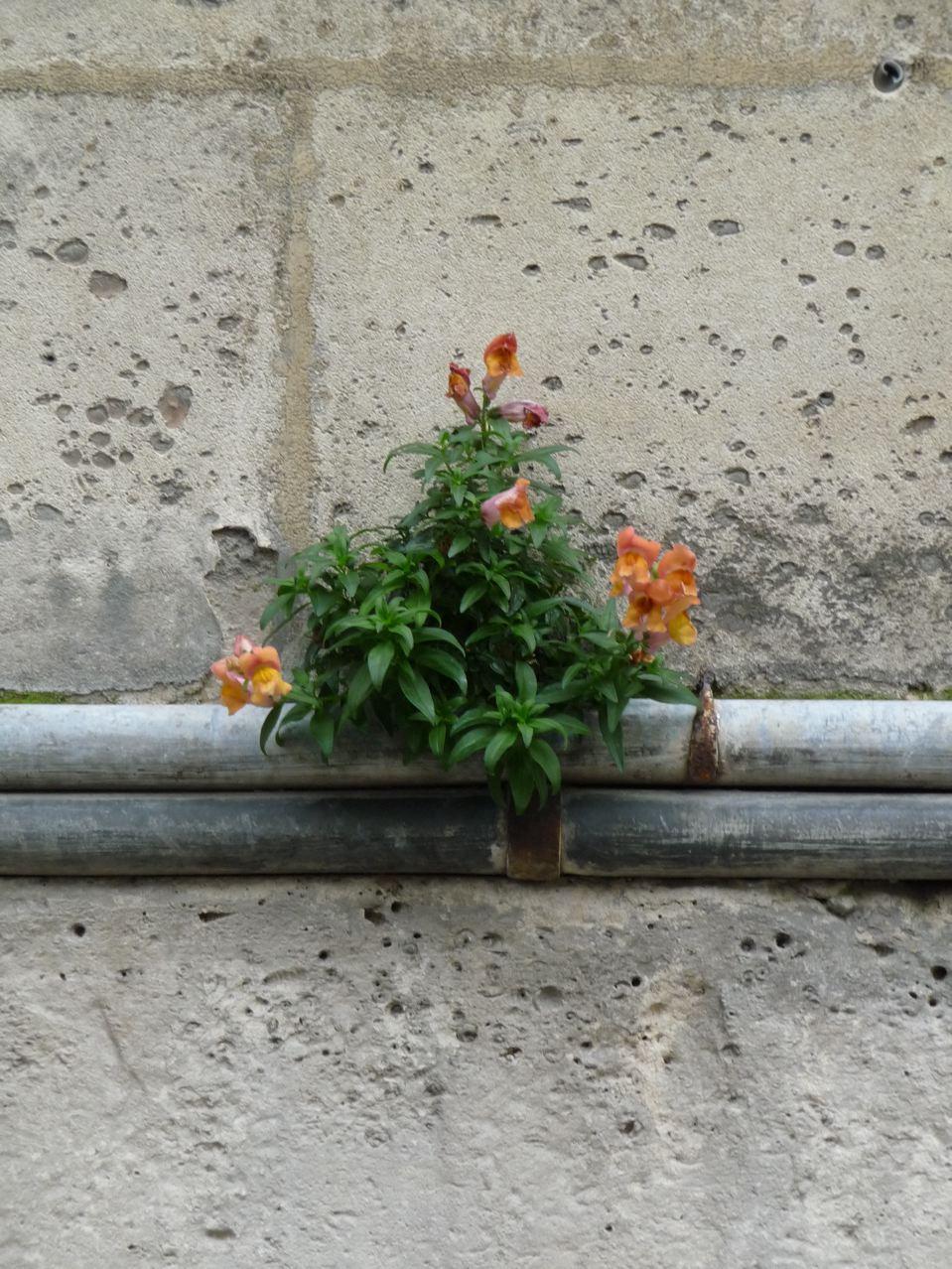 Mur végétal naturel