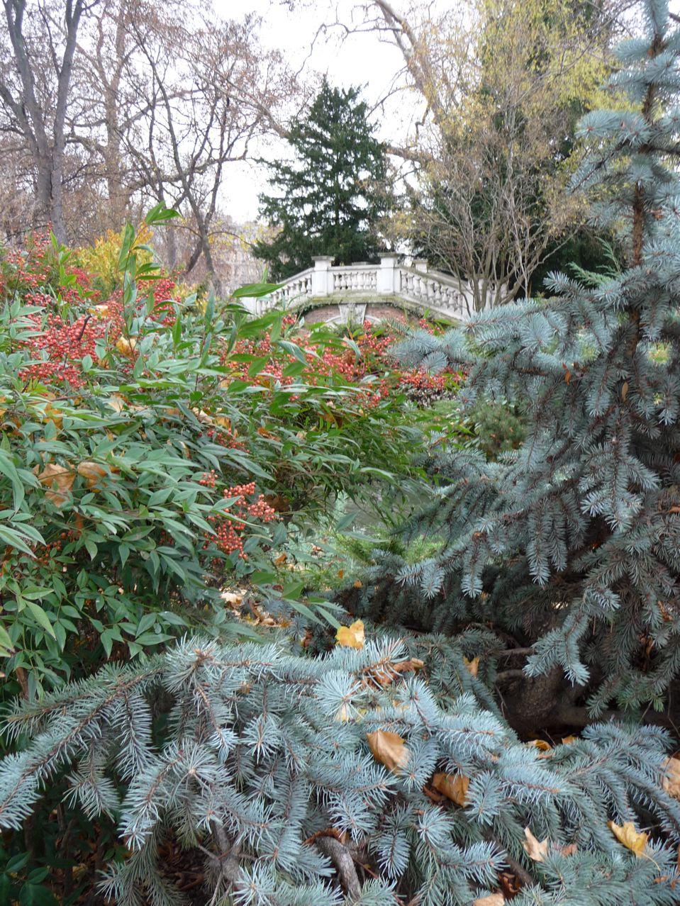 Arbre et arbuste à feuillage persistant en hiver dans le parc Monceau, Paris 8e (75)