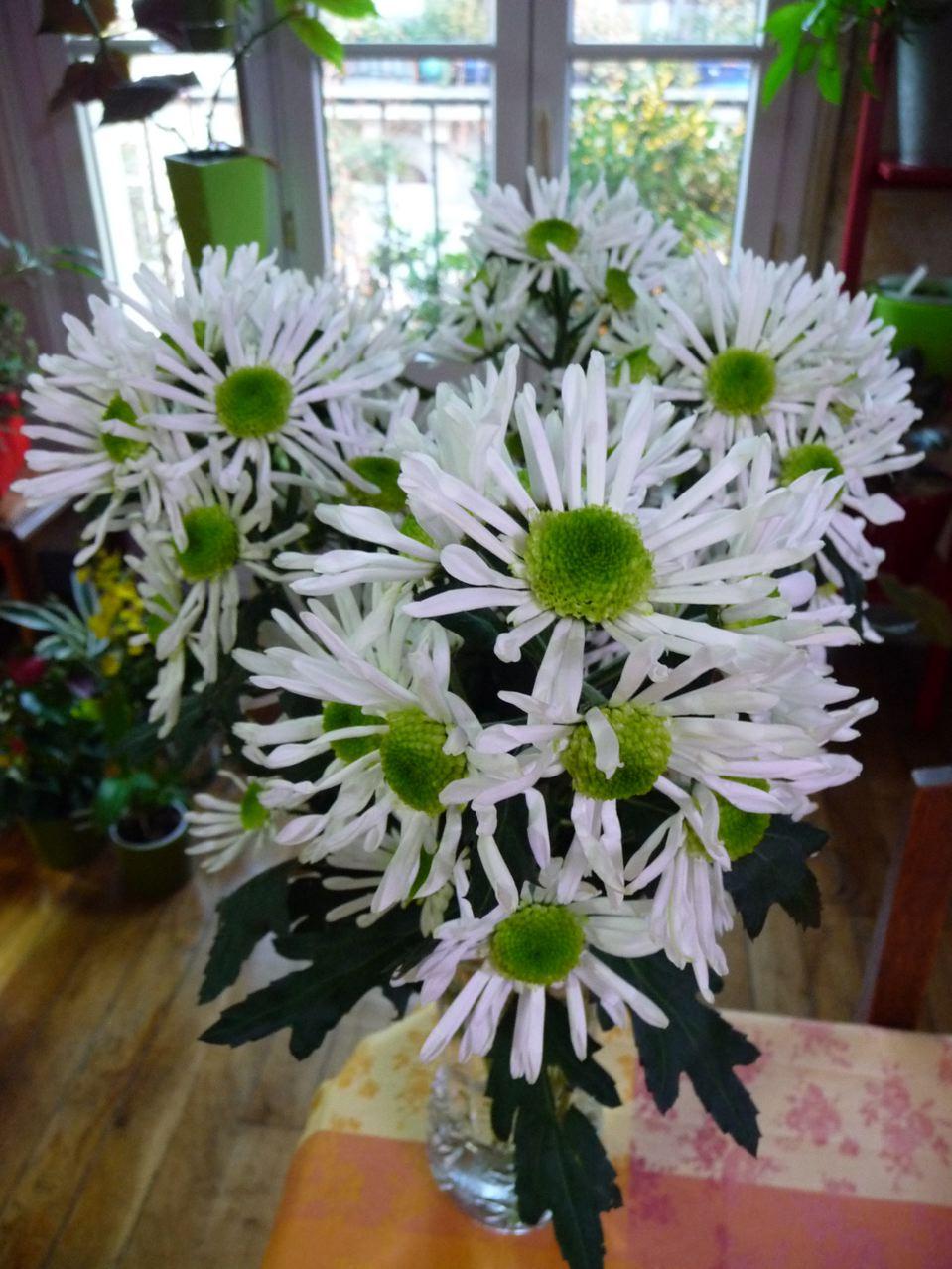 Fleurs coupées : chrysanthèmes blancs et verts