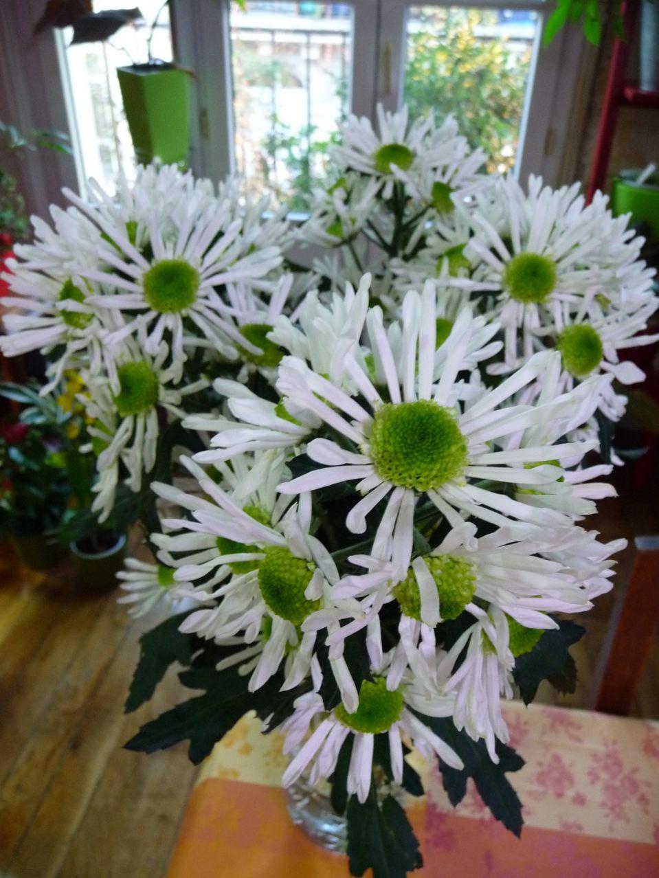 Fleurs coupées : chrysanthème blanc et vert