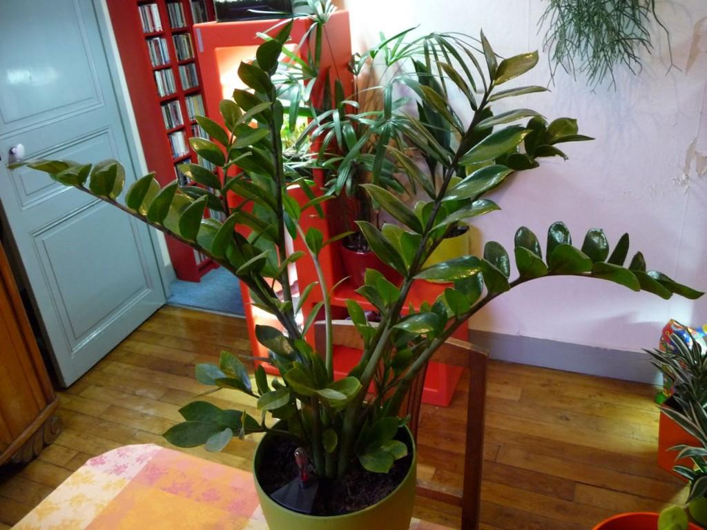 Plante verte d'intérieur facile à cultiver