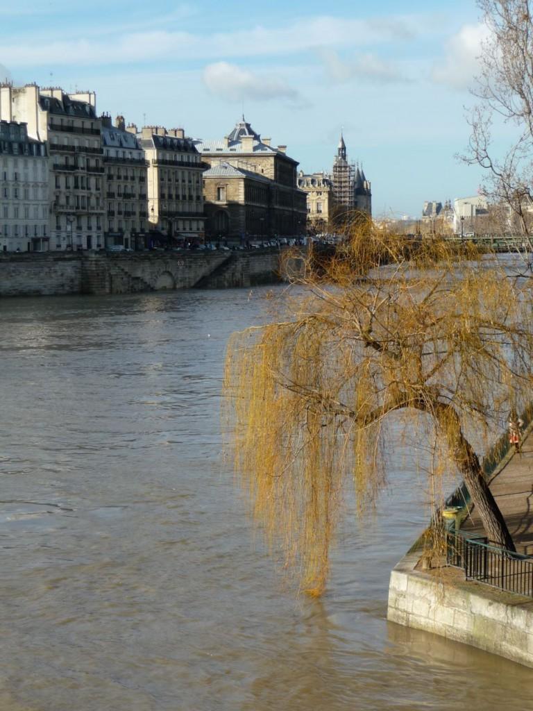 Saule pleureur au bord de la Seine en crue dans Paris