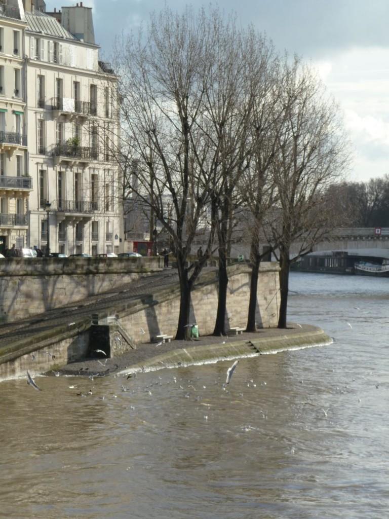 Ile Saint-Louis et Seine en crue