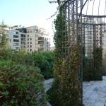 Plantes grimpantes sur tonnelle : lierre et jasmin d'hiver