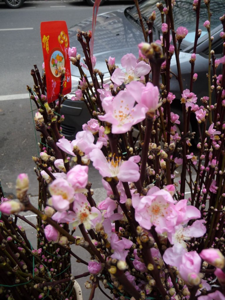 Fleurs traditionnelles pour le nouvel an chinois : cerisier à fleurs (Prunus)