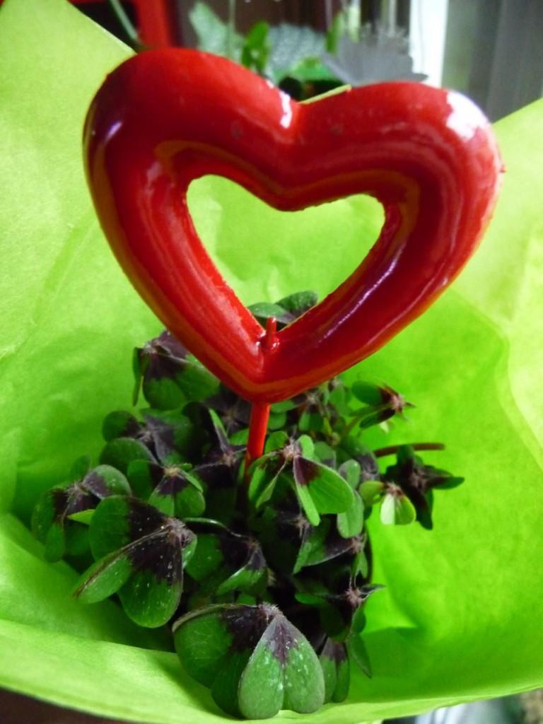 Le cadeau porte-bonheur pour la Saint-Valentin : un petit trèfle à quatre feuilles