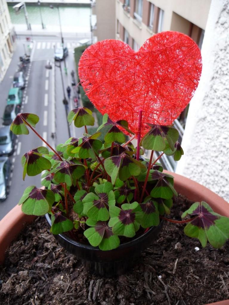 Cadeau porte-bonheur pour la Saint-Valentin : un trèfle à quatre feuilles