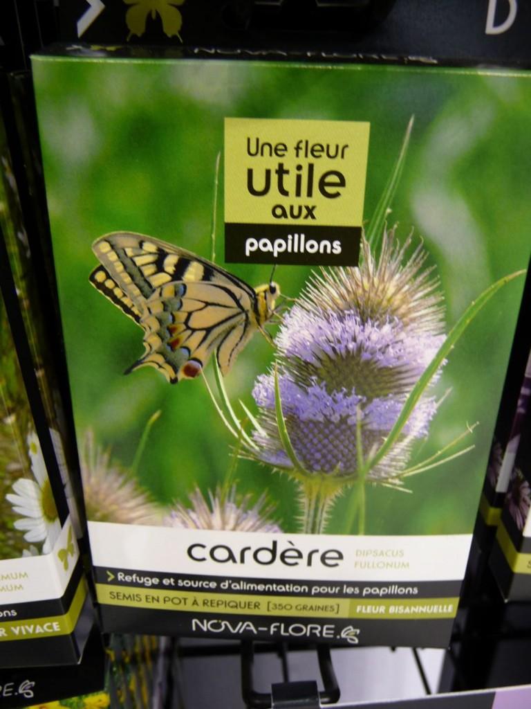 Graines de cardère, Espace Biodiversité, Nova-Flore, photo Alain Delavie