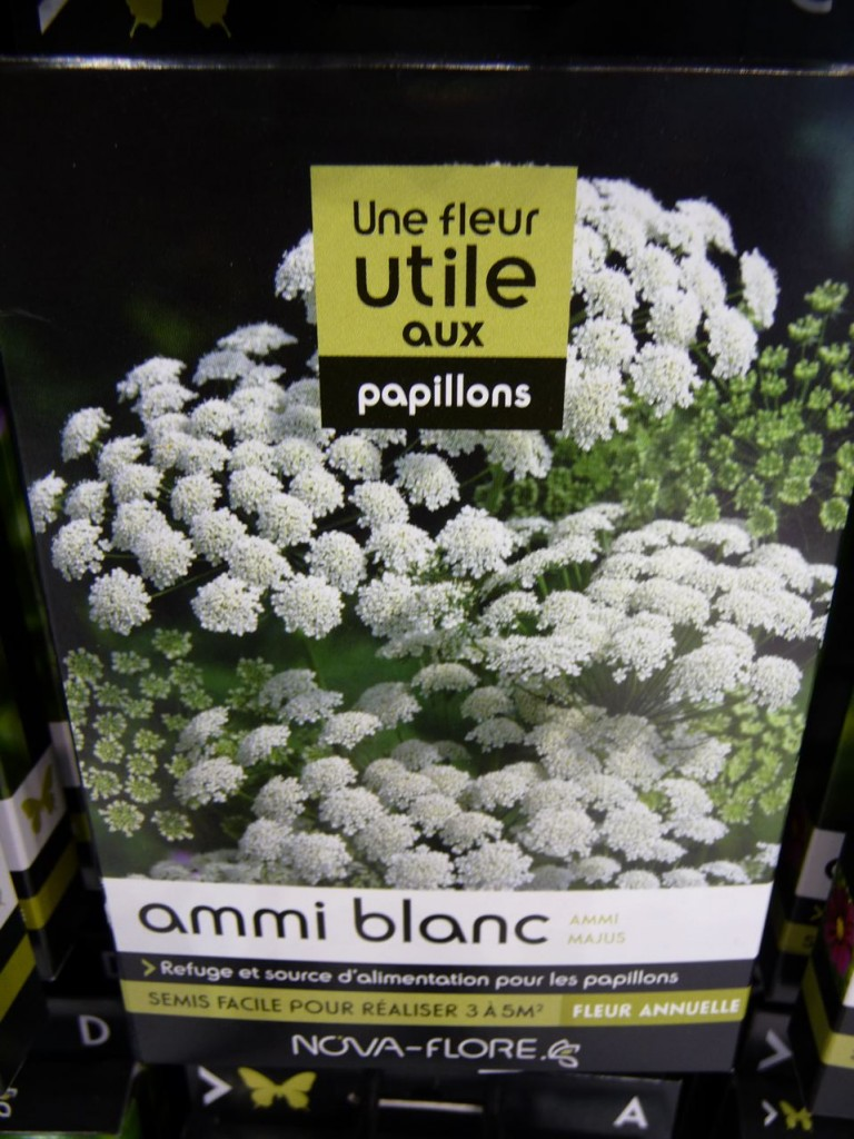 Graines d'ammi, Espace Biodiversité, Nova-Flore, photo Alain Delavie