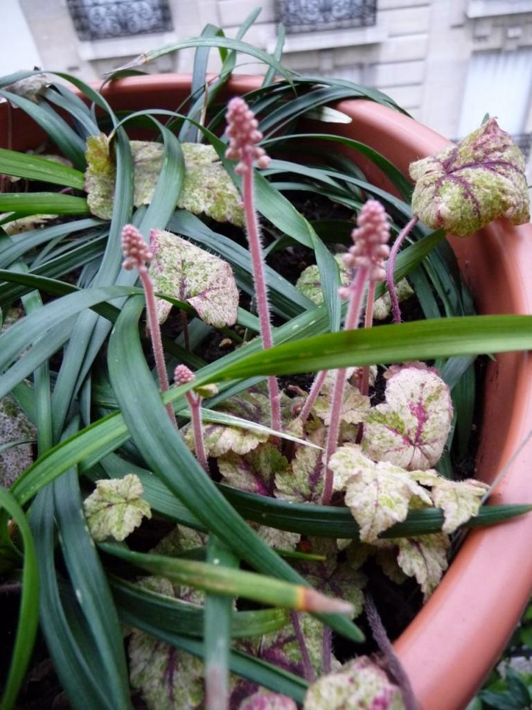 Le départ de la végétation sur mon balcon