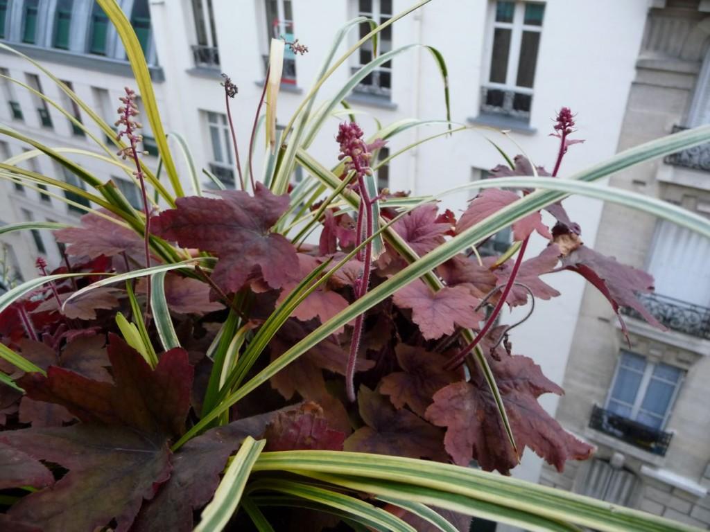 Départ de la végétation sur mon balcon