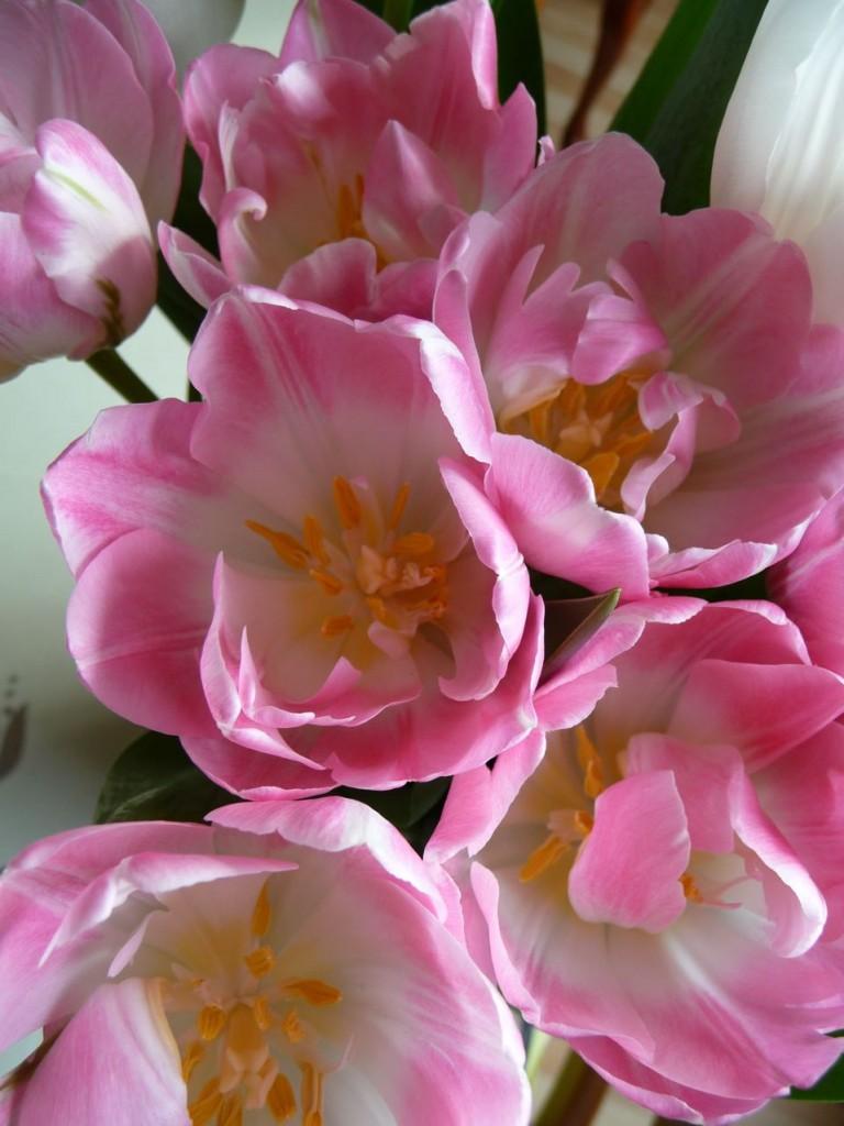 Bouquet de fleurs printanières : tulipes