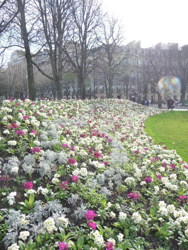 Fleurissement printanier dans Paris
