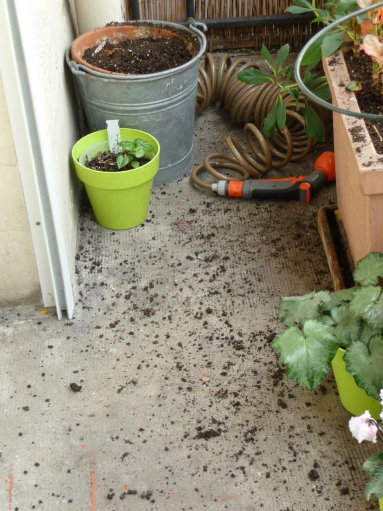 Dégâts des oiseaux sur mon balcon : terreau éparpillé partout