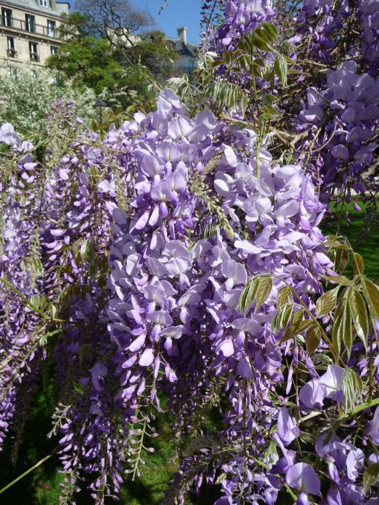 Floraisons printanières dans les jardins de Paris