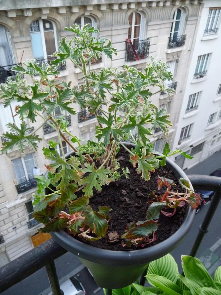 Plantations sur mon balcon au printemps