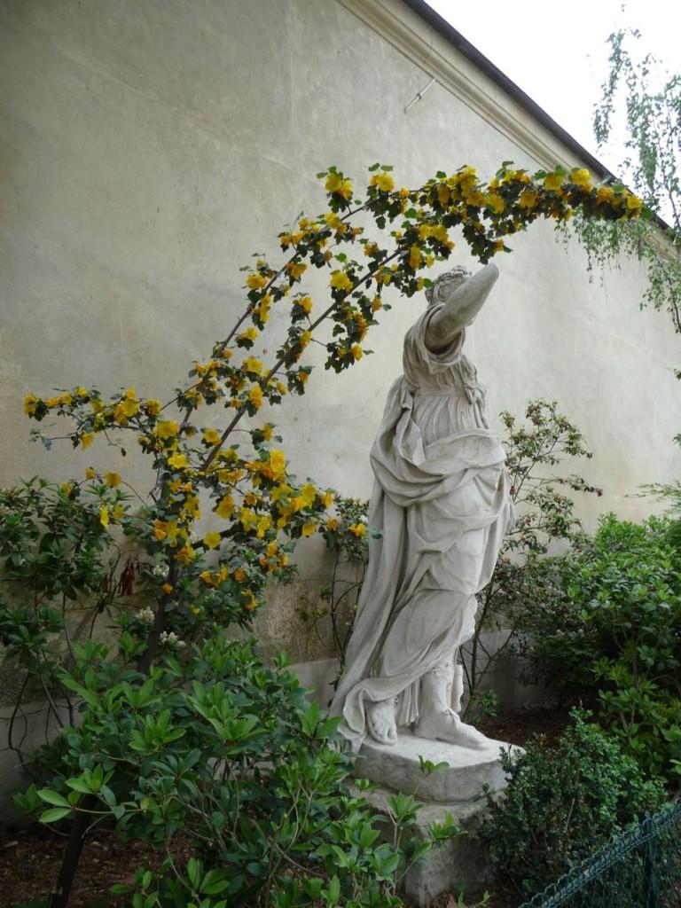 Statue et frémotodendron dans le square Léopold Achille