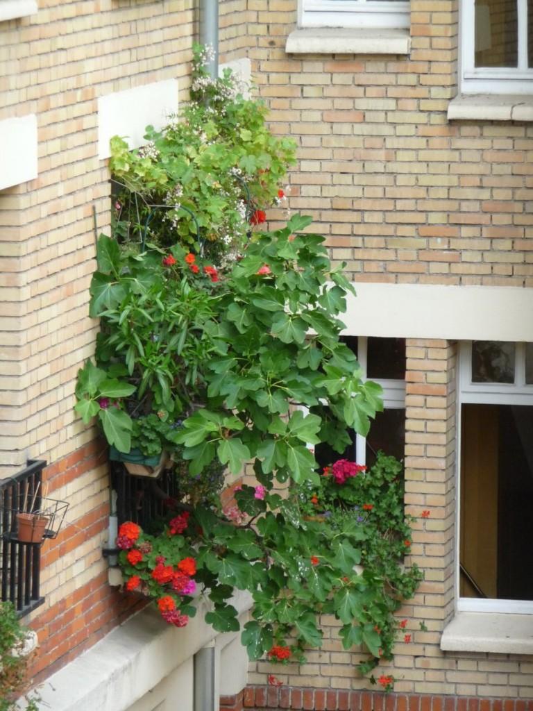Balcon parisien ou jungle urbaine