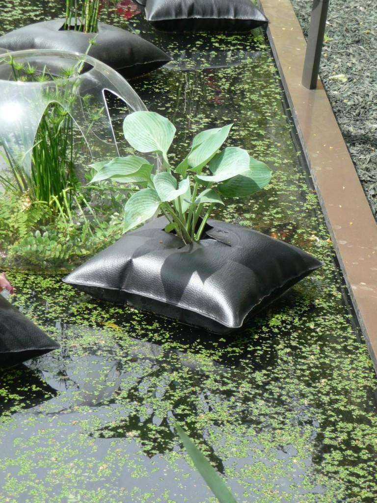 Hosta dans un Green Pillow, création Alexis Tricoire / Agence Art Terre, Jardins Jardin 2011, Jardin des Tuileries, Paris 1er (75)
