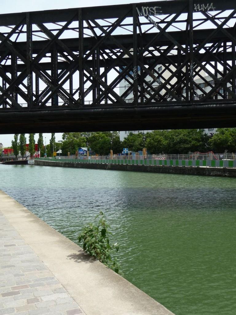 Arbre aux papillons (Buddleia davidii) poussant au bord du canal de l'Ourcq, Paris 19e (75)