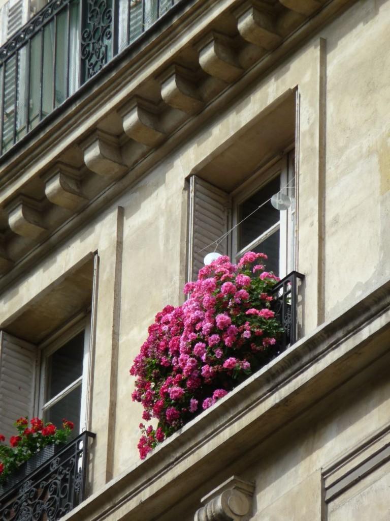 Balcon fleuri avec des pélargoniums, Paris 16e (75)