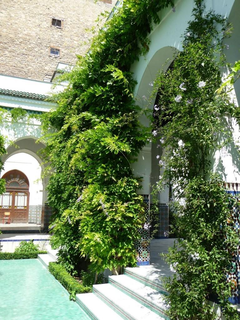 Glycine et Solanum dans le jardin à l'Andalouse de la Grande Mosquée, Paris 5e (75)