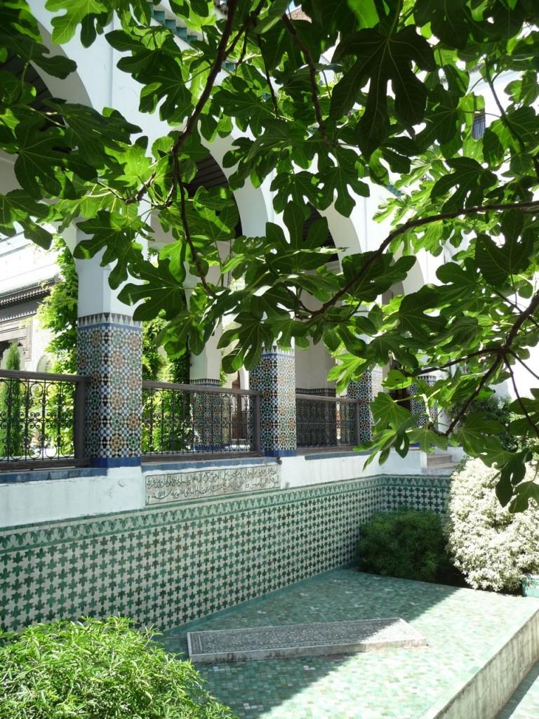 Figuier dans la Grande Mosquée, Paris 5e (75)