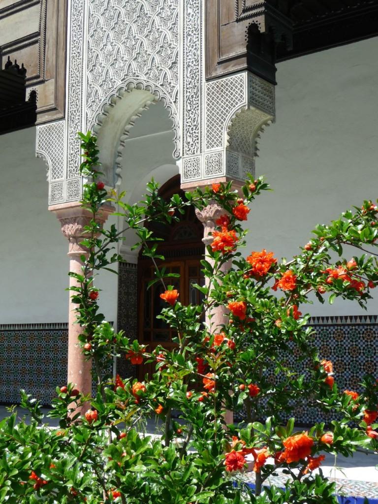 Grenadier fleuri dans la cour d'honneur et le jardin à l'Andalouse de la Grande Mosquée, Paris 5e (75)