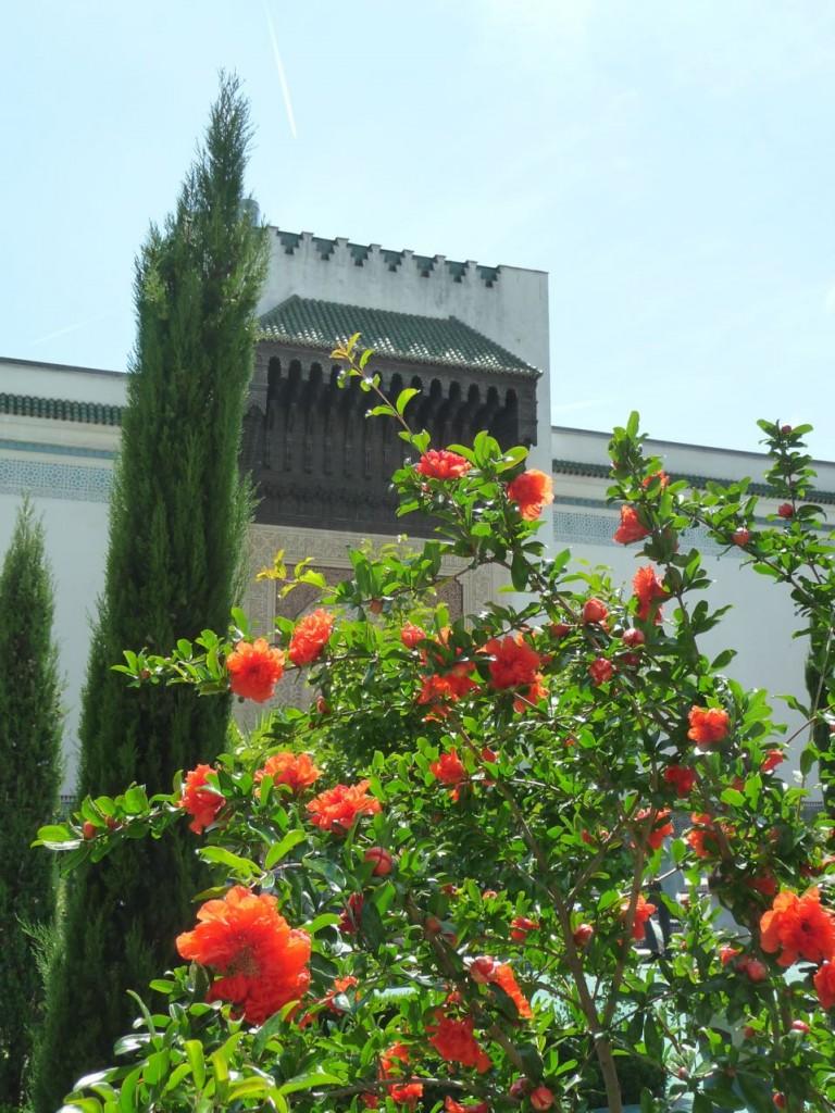 Cyprès et grenadier fleuri dans la cour d'honneur et le jardin à l'Andalouse de la Grande Mosquée, Paris 5e (75)