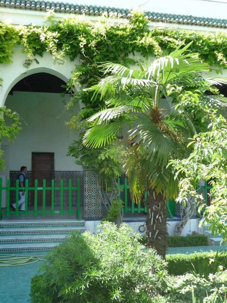 Palmier dans la cour d'honneur et le jardin à l'Andalouse de la Grande Mosquée, Paris 5e (75)