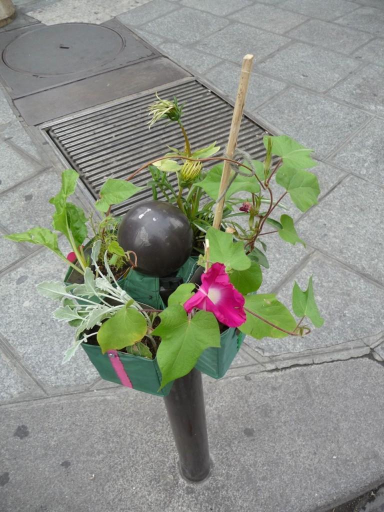 Potogreen, rue du Quatre-Septembre près du métro Quatre-Septembre,Paris 2e (75)