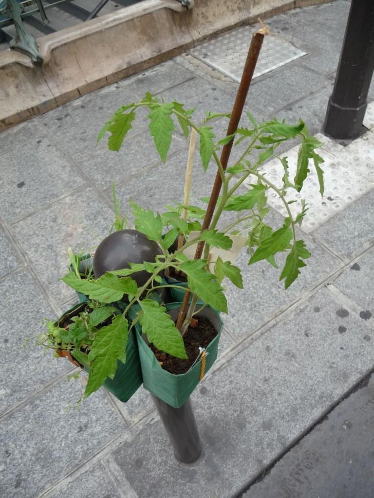Tomate sur Potogreen, rue du Quatre-Septembre près du métro Quatre-Septembre,Paris 2e (75)