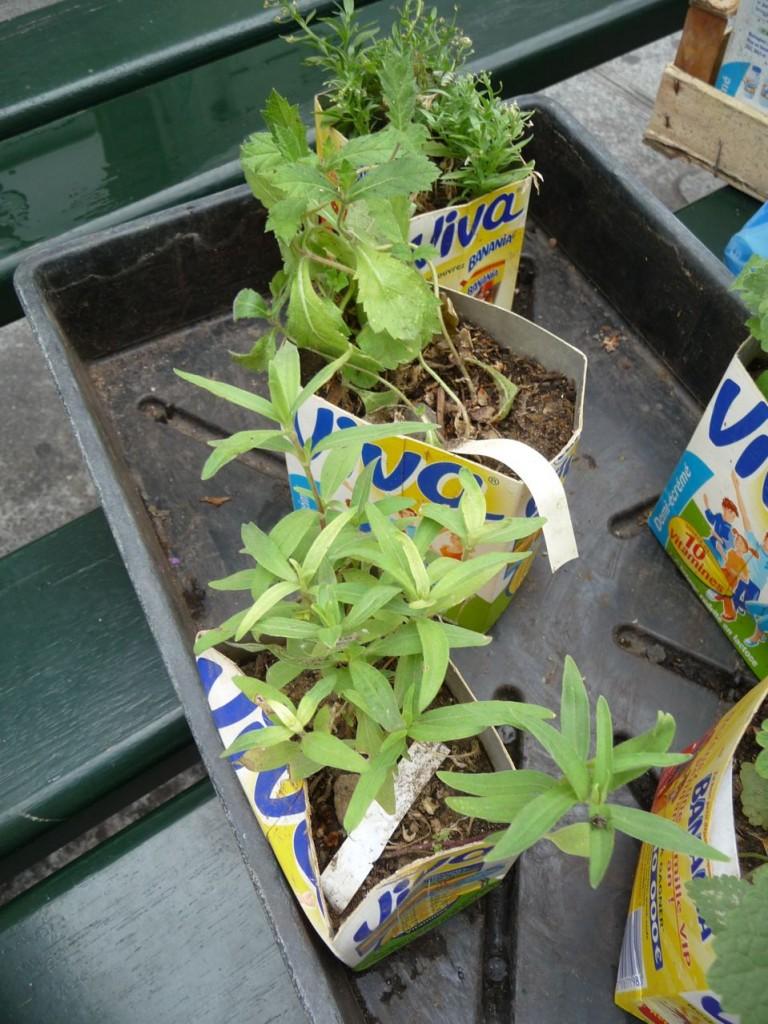 Jeunes plants préparés pour un potogreen, Métro Quatre-Septembre, Paris 2e (75)