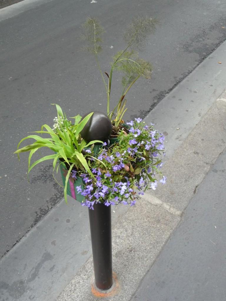 Lobélies et fenouil sur un Potogreen, rue Saint-Anne, Paris 2e (75)