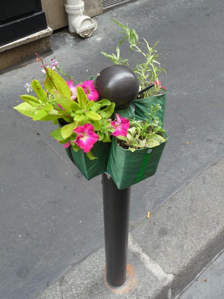 Pétunia et autres plantes sur un Potogreen, rue Saint-Anne, Paris 2e (75)
