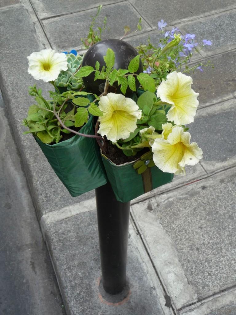 Pétunias jaunes sur un Potogreen, rue Saint-Anne, Paris 2e (75)