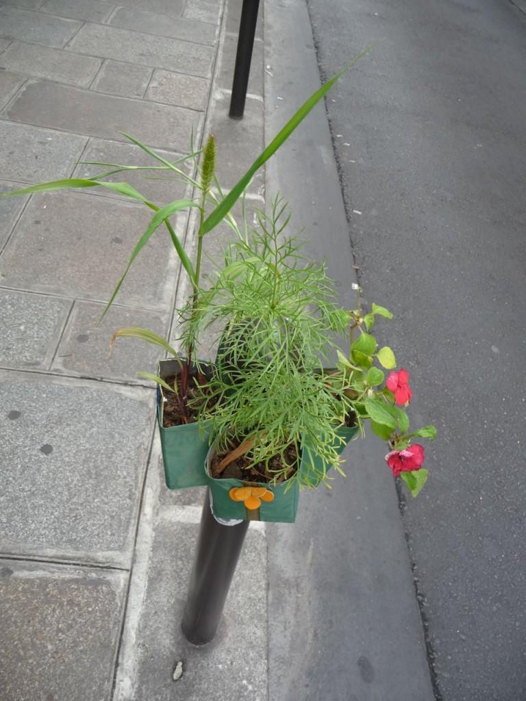 Cosmos, impatiens et autres plantes sur un Potogreen, rue Saint-Anne, Paris 2e (75)