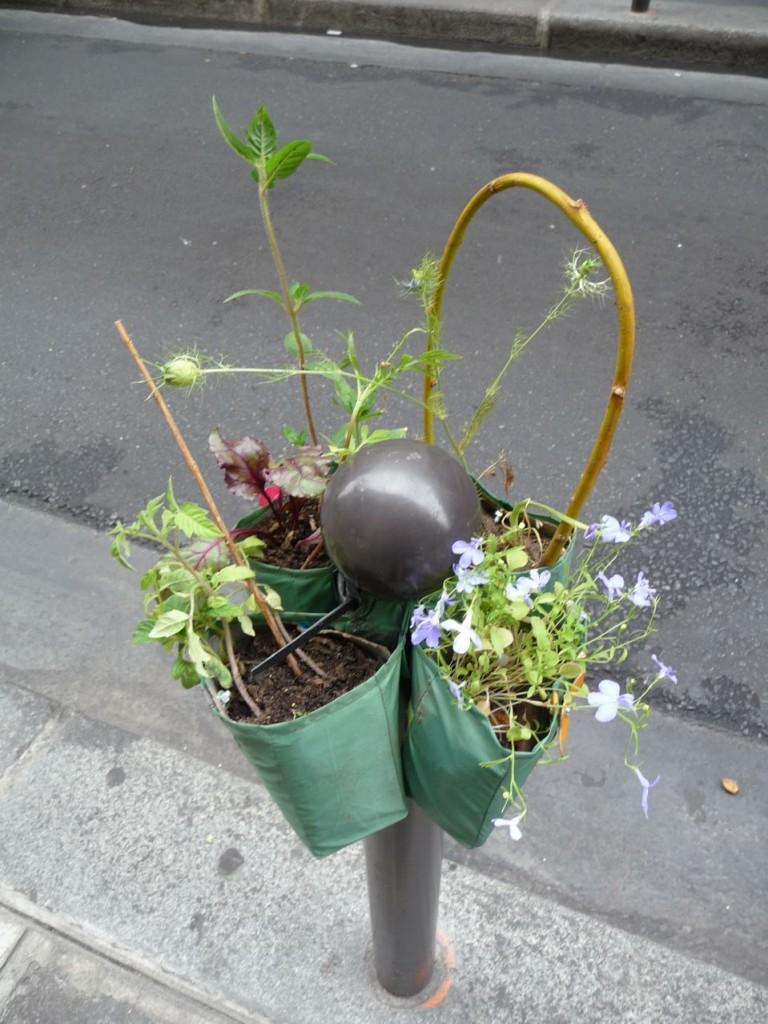 Nigelle, lobélie, betterave et autres plantes sur un Potogreen, rue Saint-Anne, Paris 2e (75)