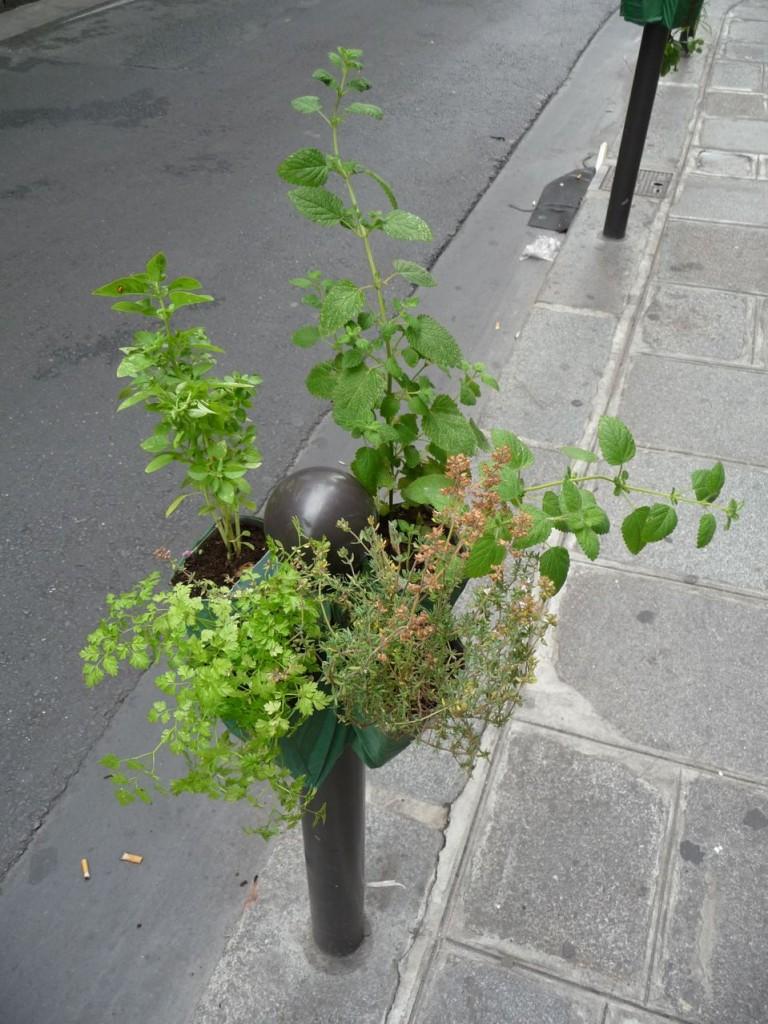 Plantes aromatiques sur un Potogreen, rue Saint-Anne, Paris 2e (75)