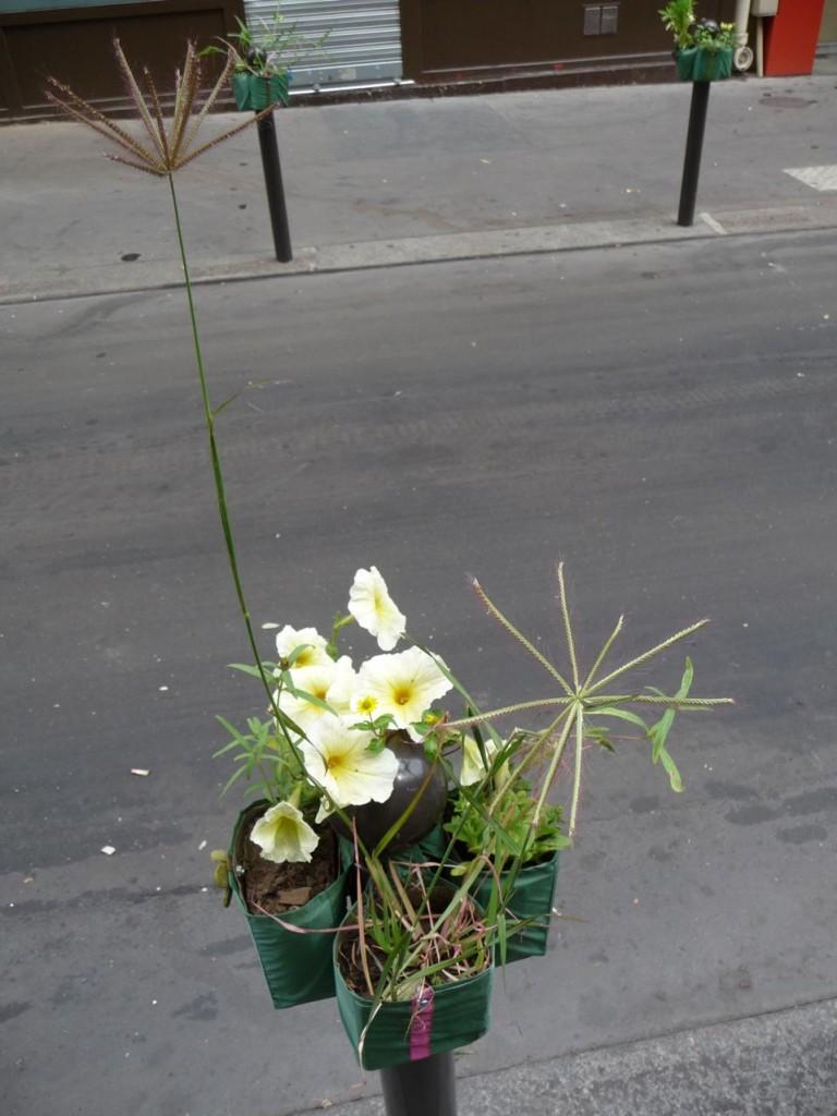 Pétunia jaune et autres plantes sur Potogreen dans la rue Saint-Marc, Paris 2e (75)