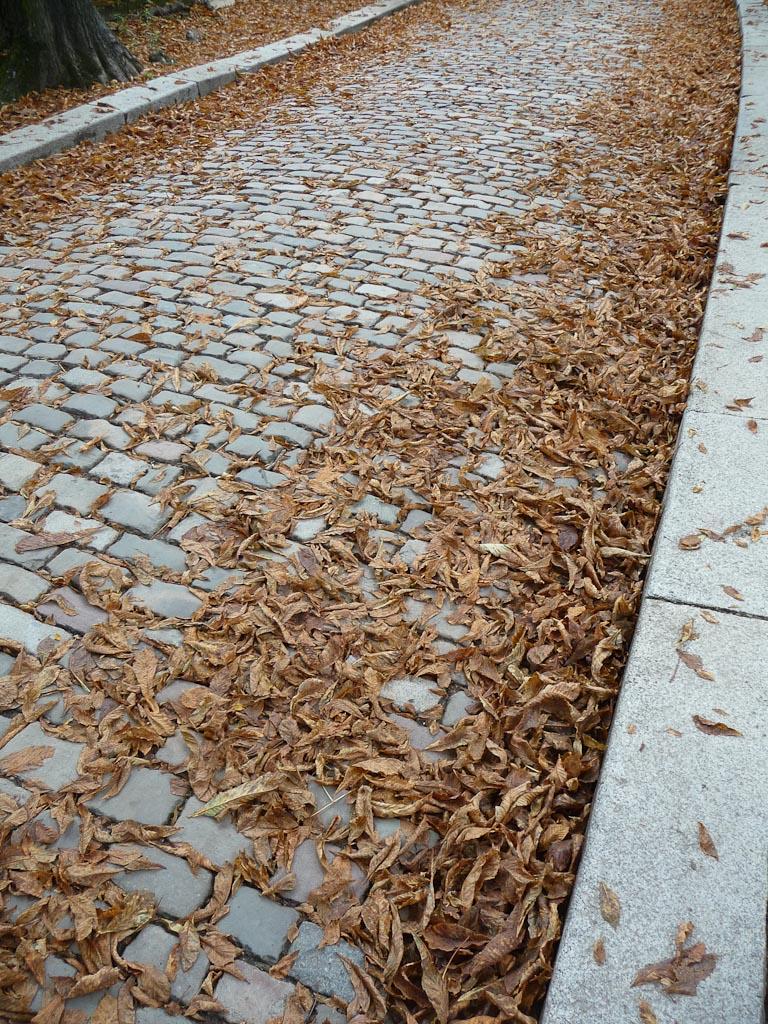 Allée jonchée de feuilles mortes de marronniers dans le Cimetière du Père Lachaise, Paris 20e (75)