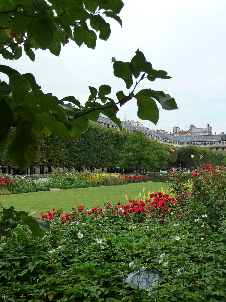 Fleurissement estival du jardin du Palais-Royal, Paris 1er (75)