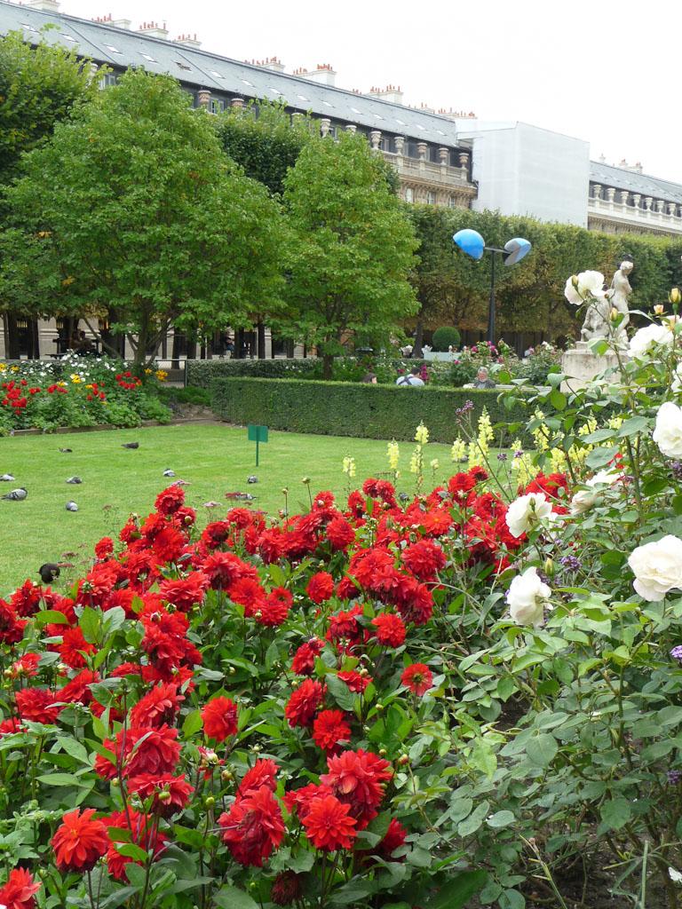 Dahlias et rosiers, fleurissement estival du jardin du Palais-Royal, Paris 1er (75)