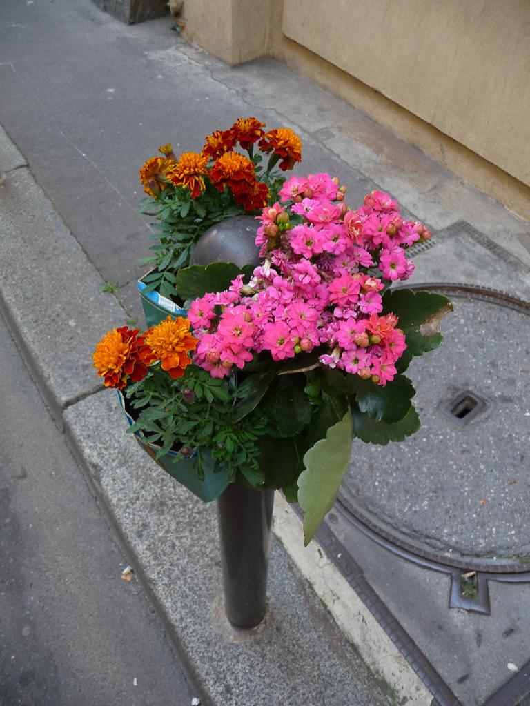 Oeillets d'Inde et kalanchoé, Potogreen dans la rue de Hanovre en été, Paris 2e (75), Paris Label