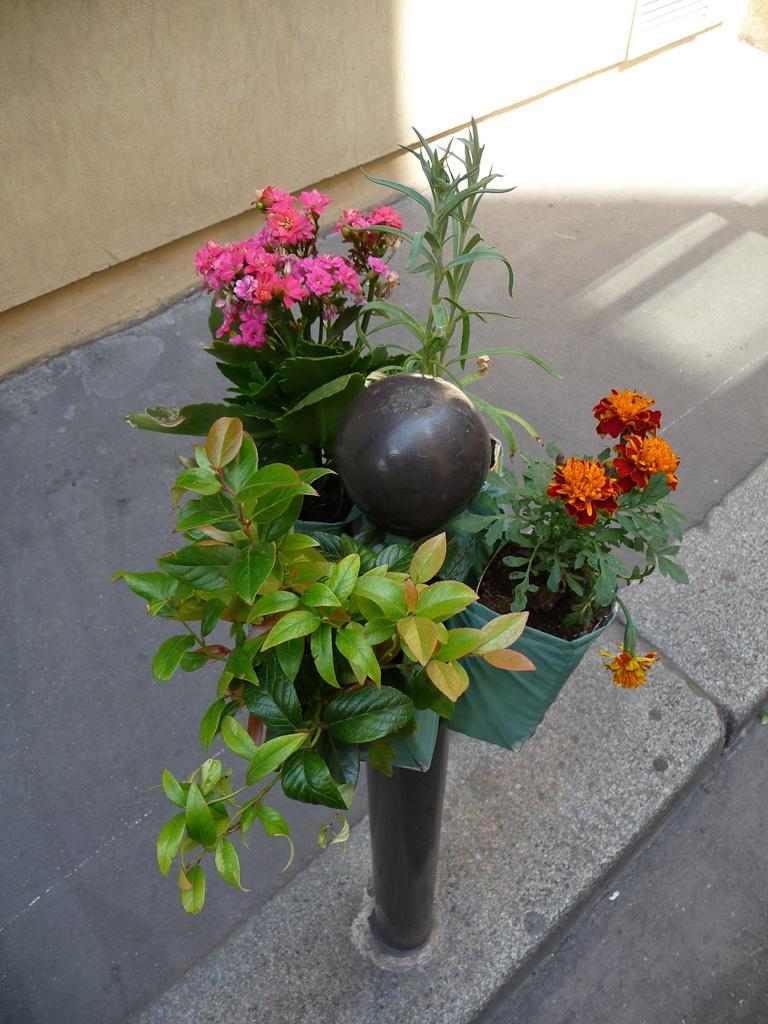 Oeillet, kalanchoé, oeillet d'Inde et petit arbuste sur Potogreen dans la rue de Hanovre en été, Paris 2e (75), Paris Label