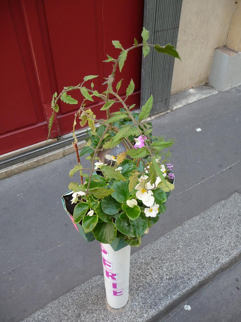 Tomate et bégonia sur Potogreen dans la rue de Hanovre en été, Paris 2e (75), Paris Label