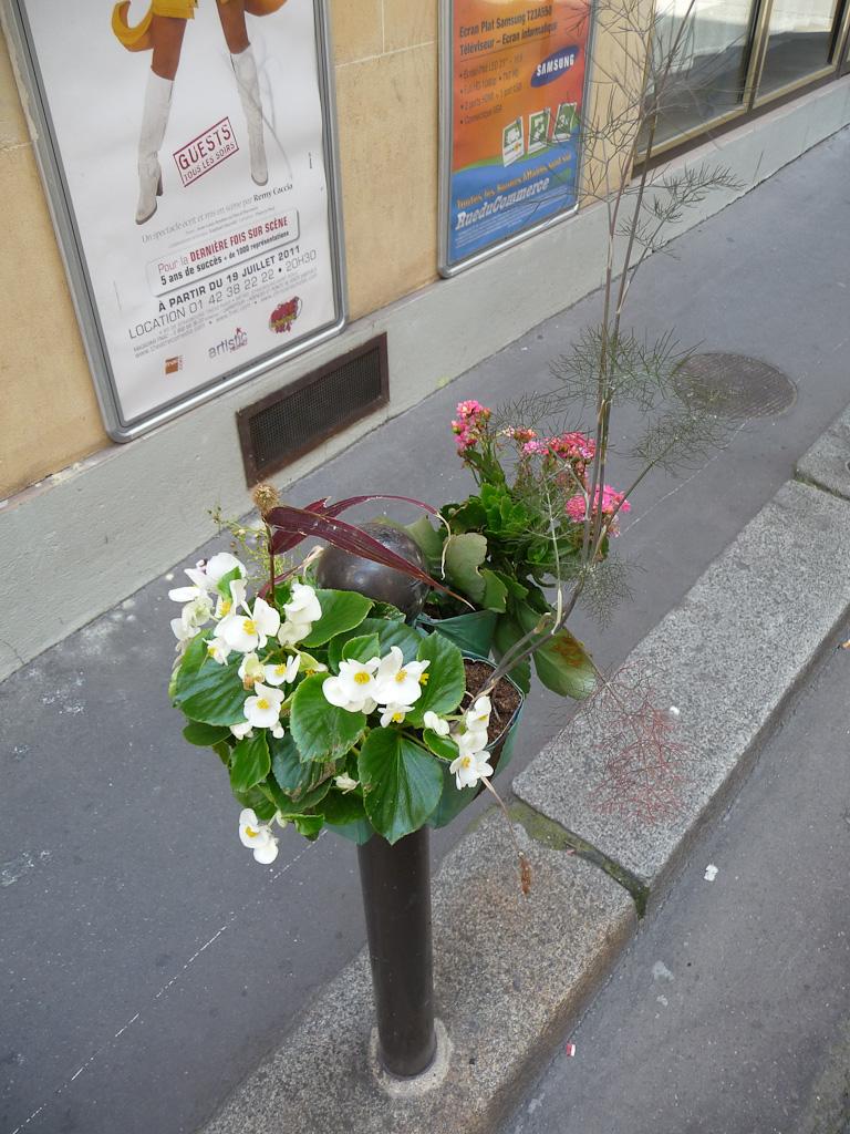 Bégonia et kalanchoé sur Potogreen dans la rue de Hanovre en été, Paris 2e (75), Paris Label
