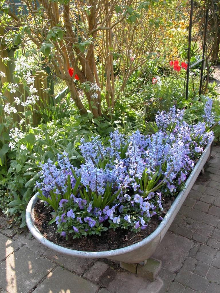 Baignoire fleurie avec des jacinthes et des pensées