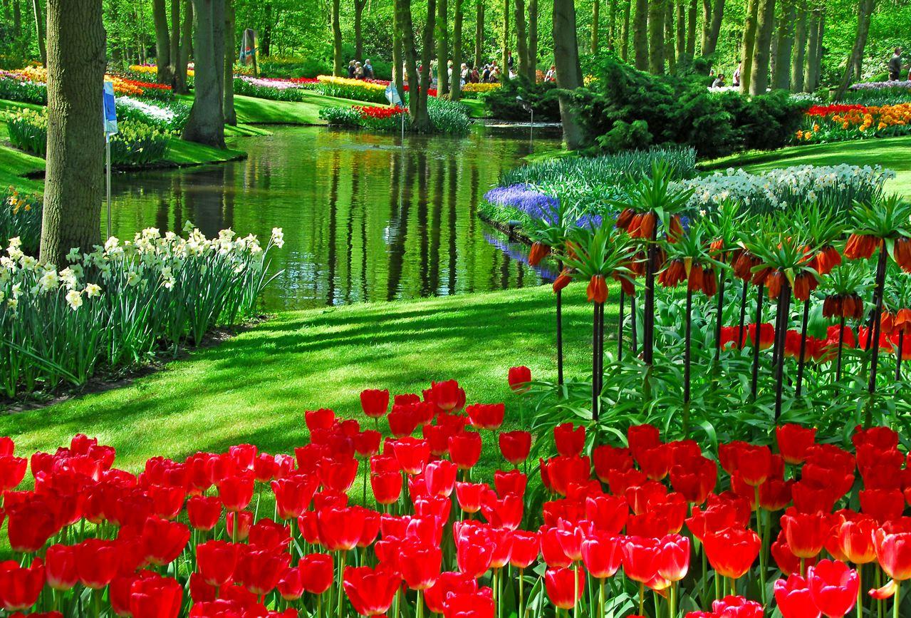 Bulbes à floraison printanière au parc de Keukenhof en Hollande